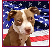 American pitbull Terrier puppy Photographic Print