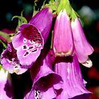Dressed in purple by Sandra  Sengstock-Miller