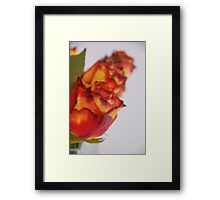 Buds in a Row Framed Print