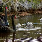 Mrs Swan Speaks! by Meg Hart