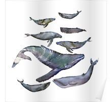 whales!! Poster