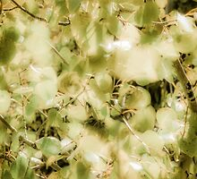 Colorado Aspens - Soft Green by Susan See