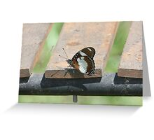 Common diadem Greeting Card