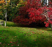 Under an Arborous Rainbow by Peter Kurdulija