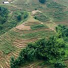 Sapa / Lao Chai Vietnam Paddy fields in the mountains. by stuwdamdorp