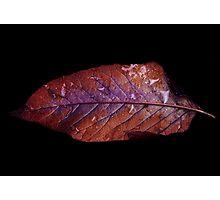 Unique Leaf Photographic Print