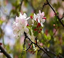 Spring Blossoms in the Southern Hemisphere 2 by RGKphotos