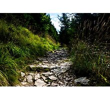 Wild Path in the Mountains - Nature Photography Photographic Print
