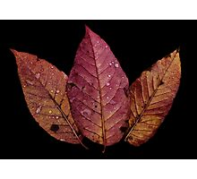 Pink and Orange Leaves  Photographic Print