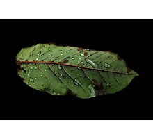 Watery Green Leaf Photographic Print