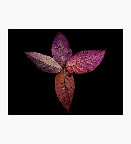 Leaf Spiral  Photographic Print