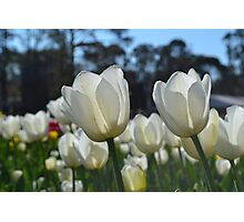 Floriade, 2014 Photographic Print