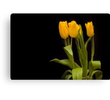 Yellow tulips on a black background Canvas Print