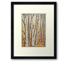 Birch Woods Framed Print