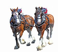 Working Clydesdales by Kerry  Hill