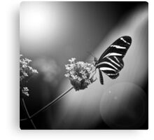 Butterfly in Mono Canvas Print