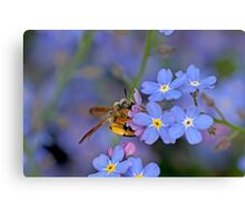 Bee and Forget Me Not Flowers Canvas Print