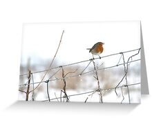 Robin singing on wire fence Greeting Card