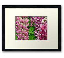 Bumblebee on Lupine Framed Print