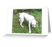 boxer white puppy Greeting Card