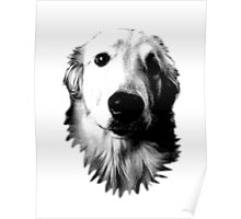 Who Me? Funny Dog Expressions. Golden Retriever Images. Poster