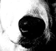 Who Me? Funny Dog Expressions. Golden Retriever Images. Sticker
