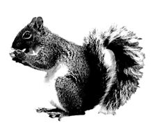 Squirrel Eating Acorns. Wildlife Digital Engraving Image by digitaleclectic