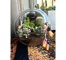 Circle of Succulents Photographic Print