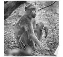 Mother and Baby Baboons - Black and White Photo Poster
