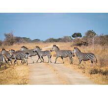 Zebra Crossing in Tanzania Photographic Print
