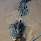Crocodile on the Adelaide River, NT by loza1976