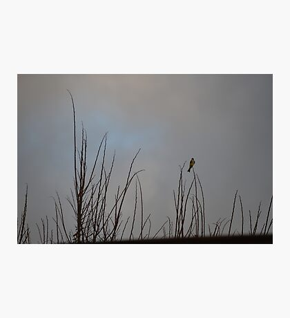 Feathered Soloist Photographic Print