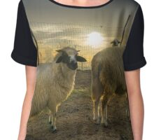 Glowing Sheep Chiffon Top