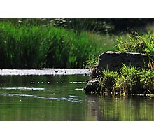 Top Tier Pond at Lisle Community Park Photographic Print