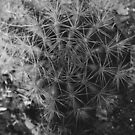 Cactus by tropicalsamuelv