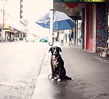 The Dog by Franziska Wernsing