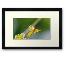 A butterfly and its shadow Framed Print