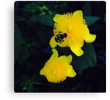 Friendly Bee Canvas Print