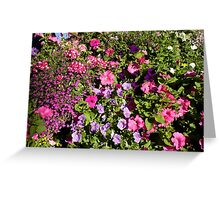 Colorful pink, white, purple garden flowers. Floral nature photography. Greeting Card