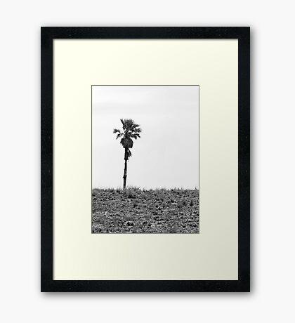 Lone Palm Framed Print