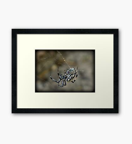 ...said the Spider to the Fly Framed Print