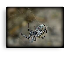 ...said the Spider to the Fly Canvas Print