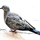 MOURNING DOVE by JAYMILO