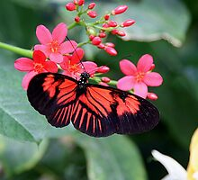 Butterfly 11 by MrMagoo2