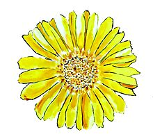 Bright and big yellow flower Photographic Print