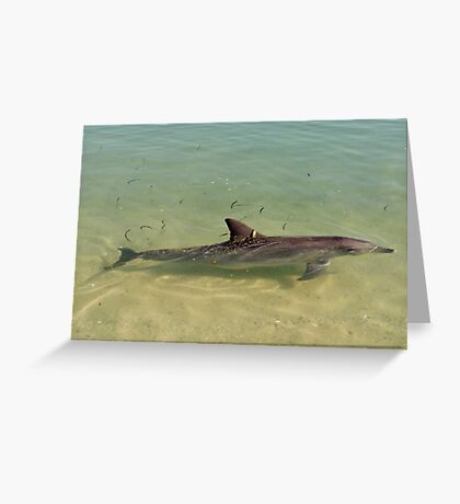 Monkey Mia Dolphins Greeting Card