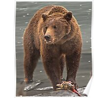 Grizzly Bear on the Chilkoot River Poster
