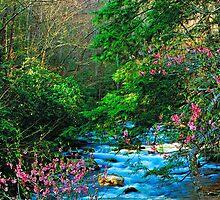 OCONALUFTEE RIVER,SPRING by Chuck Wickham