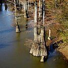 Crooked Creek Bayou at Low Watewr by WildestArt