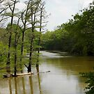 Crooked Creek Bayou at High Water by WildestArt